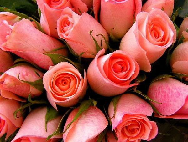 Best iOS apps for flower delivery.