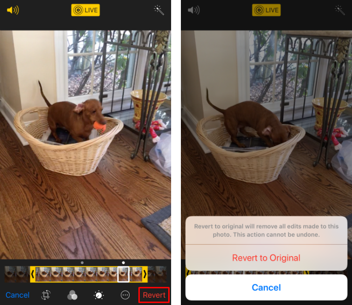 How to trim Live Photos and change the key photo on iPhone and iPad.